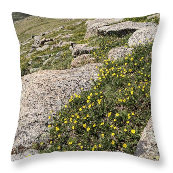 Mt. Evans Wildflowers Throw Pillow by Aaron Spong