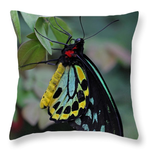 Natural Awakenings Throw Pillow by Juergen Roth
