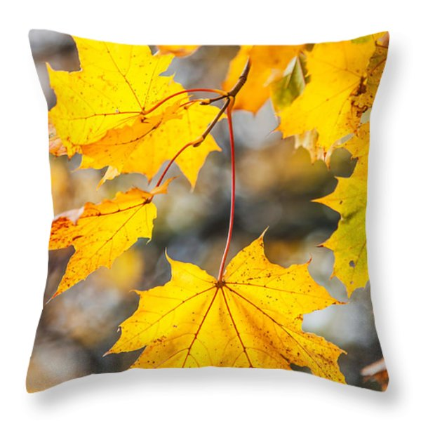 Natural Patchwork. Golden Mable Leaves Throw Pillow by Jenny Rainbow