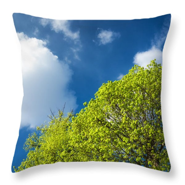 Nature In Spring - Bright Green Tree And Blue Sky Throw Pillow by Matthias Hauser