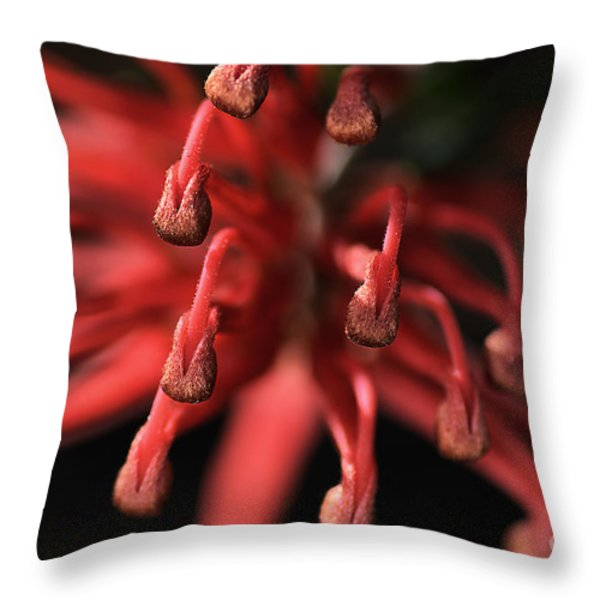 Natures Fireworks Throw Pillow by Joy Watson