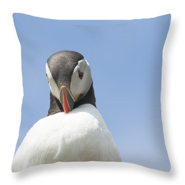Need To Look My Best Throw Pillow by Anne Gilbert