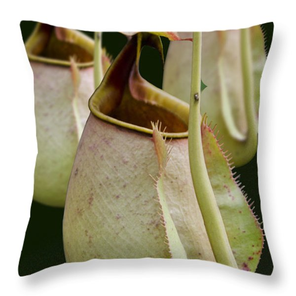 Nepenthes Throw Pillow by Roger Leege