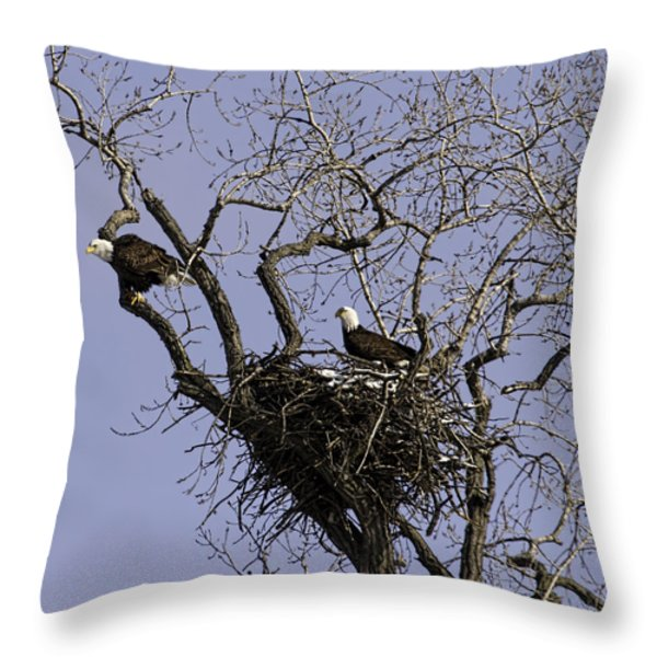 Nesting Pair Of American Bald Eagles 1 Throw Pillow by Thomas Young