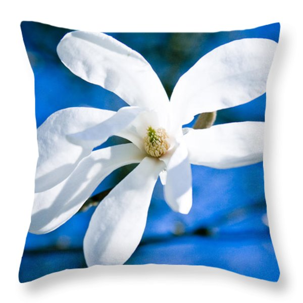 new white magnolia blossom close up Throw Pillow by Raimond Klavins