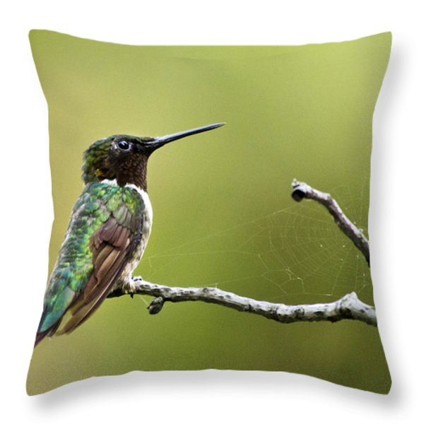 New York Hummingbird Throw Pillow by Christina Rollo