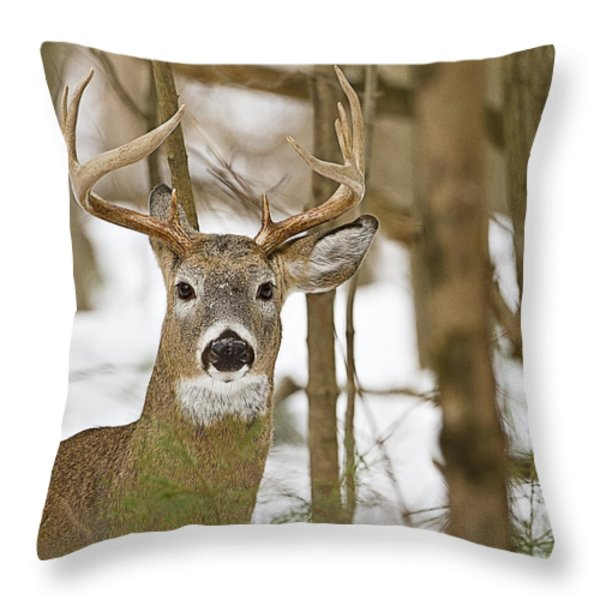 Nine Point White Tailed Buck Throw Pillow by John Vose