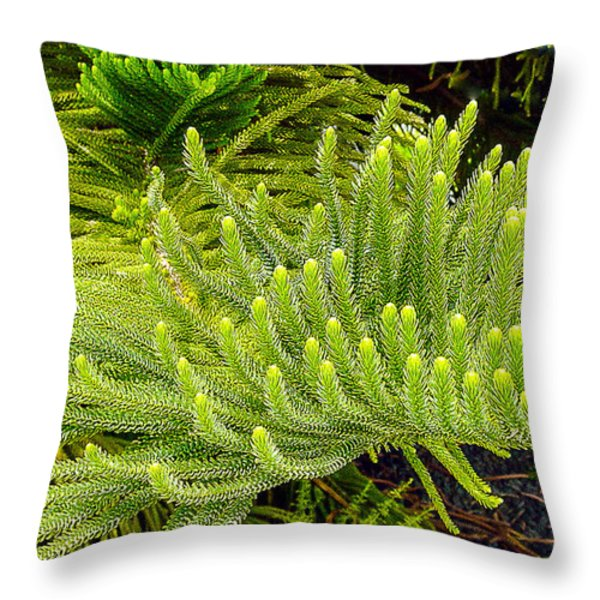 Norfolk  Island  Pine In California Throw Pillow by  Bob and Nadine Johnston