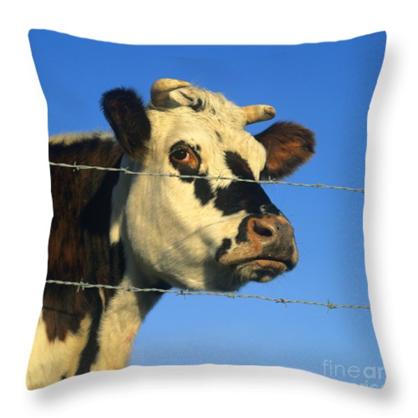 Normand cow Throw Pillow by BERNARD JAUBERT