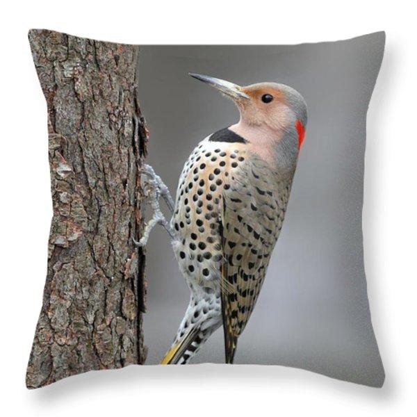 Northern Flicker Throw Pillow by Daniel Behm