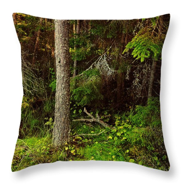 Northern Forest 1 Throw Pillow by Jenny Rainbow