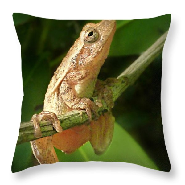 Northern Spring Peeper Throw Pillow by William Tanneberger