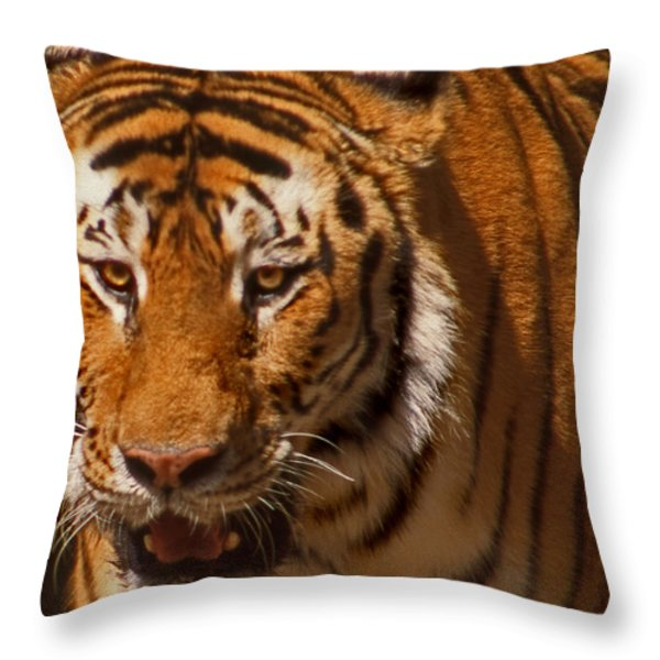 Not Happy Ears Throw Pillow by Skip Willits