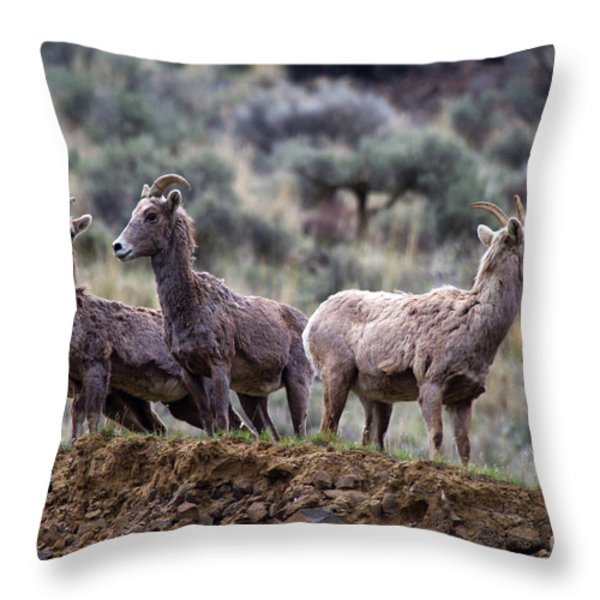 On the Ledge Throw Pillow by Mike  Dawson