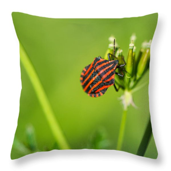One More Bottle Doesn't Hurt - Featured 3 Throw Pillow by Alexander Senin