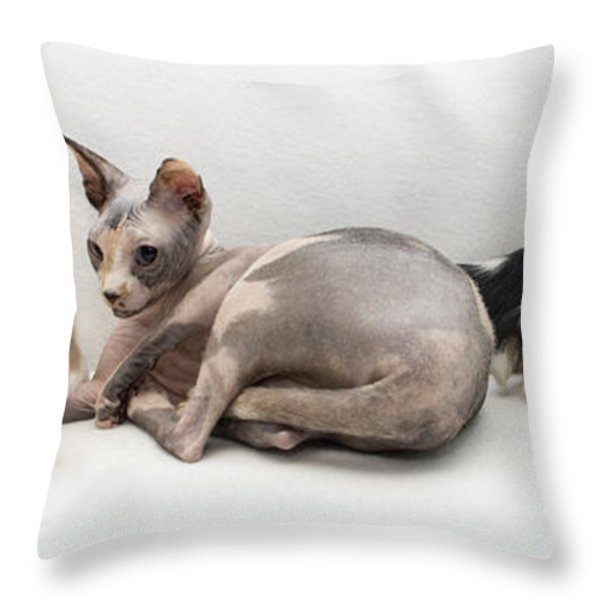 One Of These Is Not Like The Others Throw Pillow by Jeannette Hunt