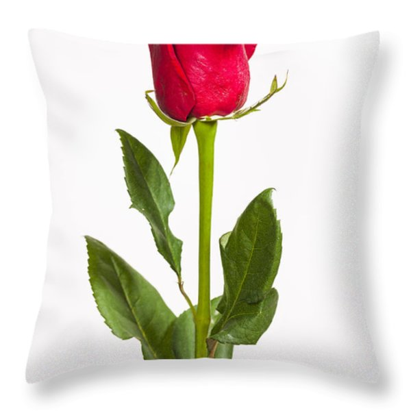 One Red Rose Throw Pillow by Adam Romanowicz
