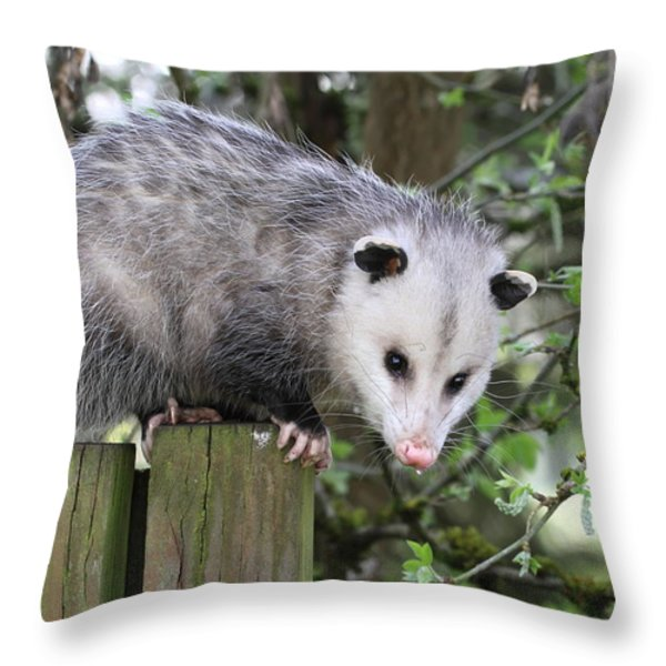 Opossum 2 Throw Pillow by Angie Vogel