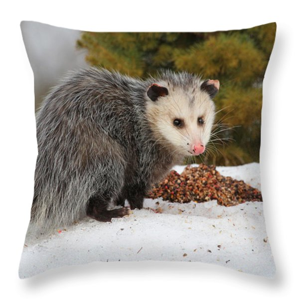 Opossum Throw Pillow by Karol  Livote