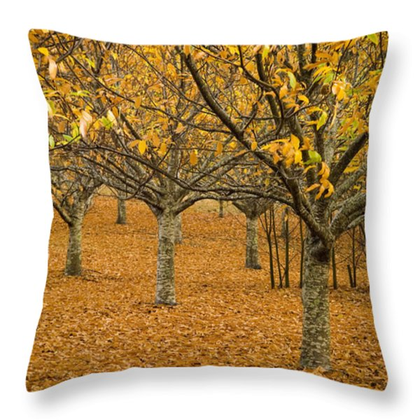 Orange Orchard Throw Pillow by Tim Hester