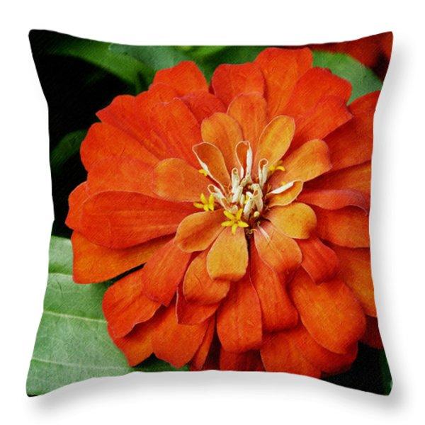 Orange Velvet Zinnia Throw Pillow by Andee Design