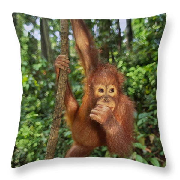 Orangutan  Throw Pillow by Frans Lanting MINT Images