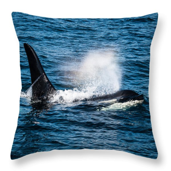 Orca Whale on the move Throw Pillow by Puget  Exposure