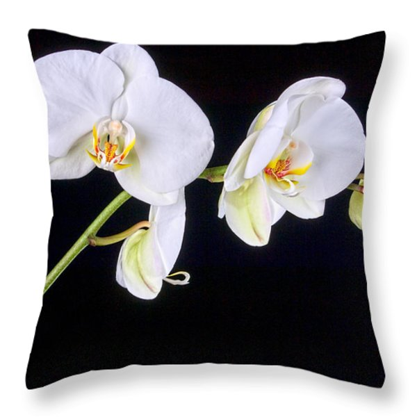 Orchid 2a Throw Pillow by Mauro Celotti