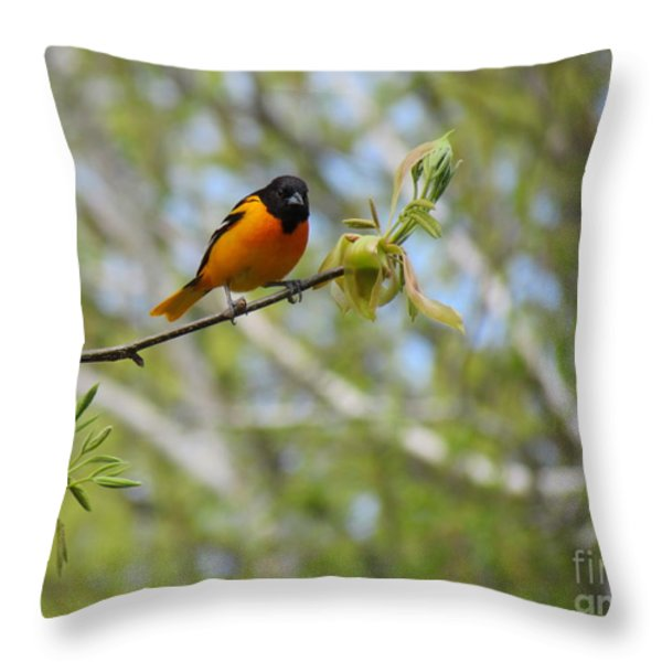 Oriole Throw Pillow by Randi Shenkman
