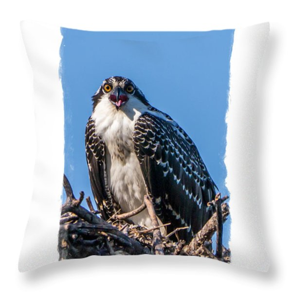 Osprey Surprise Party Card Throw Pillow by Edward Fielding