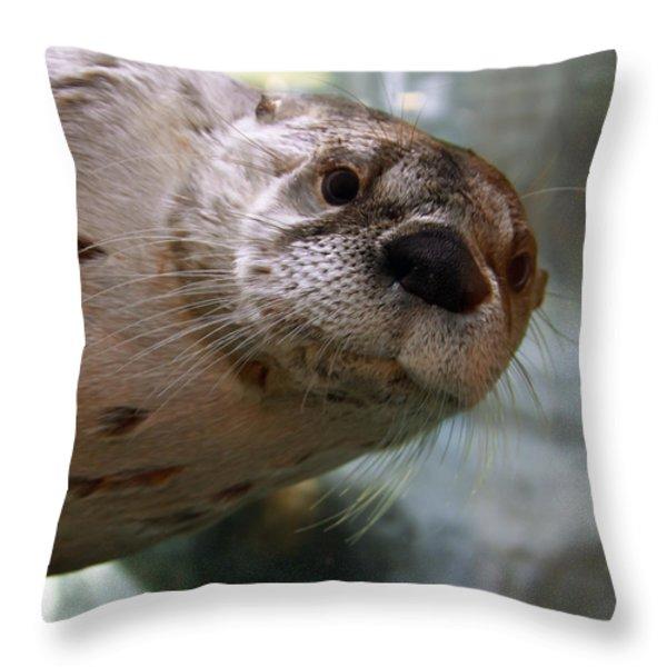 Otter Be Lookin' at You Kid Throw Pillow by John Haldane