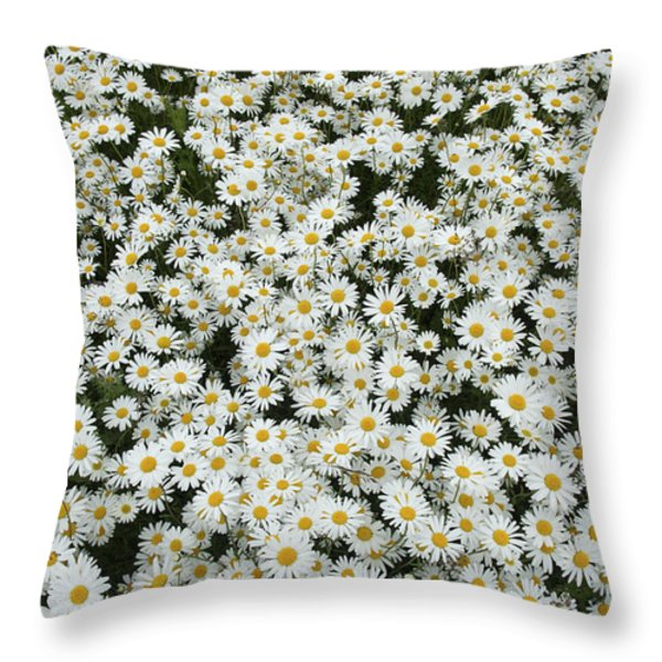 Oxeye Daises Throw Pillow by Tim Gainey