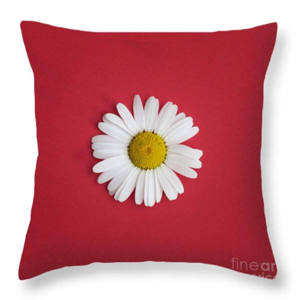 Oxeye Daisy Square Red Throw Pillow by Tim Gainey