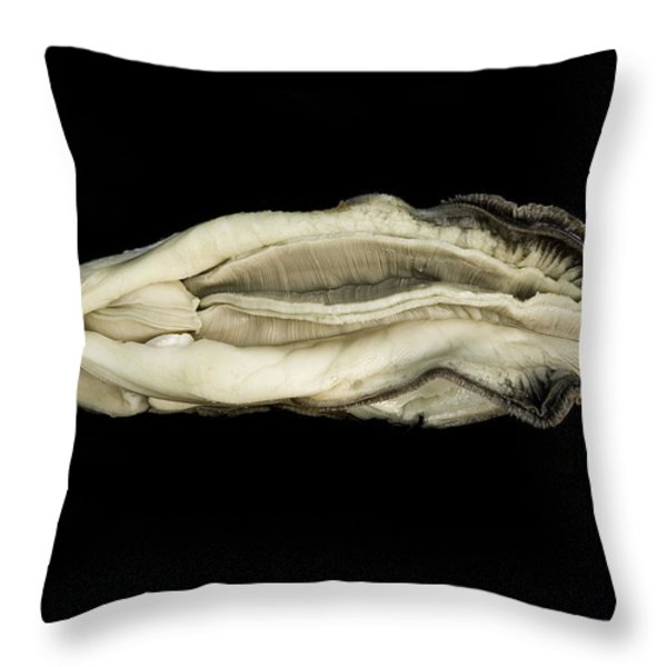 Oyster Suspended In Darkness Throw Pillow by Andy Frasheski