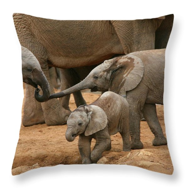 Pachyderm Pals Throw Pillow by Bruce J Robinson