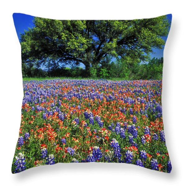 Paintbrush and Bluebonnets - FS000057 Throw Pillow by Daniel Dempster