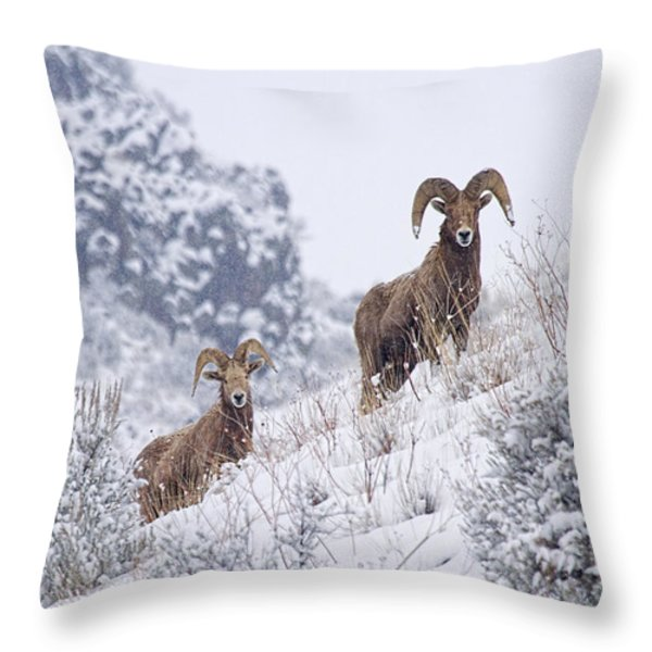 Pair Of Winter Rams Throw Pillow by Mike  Dawson