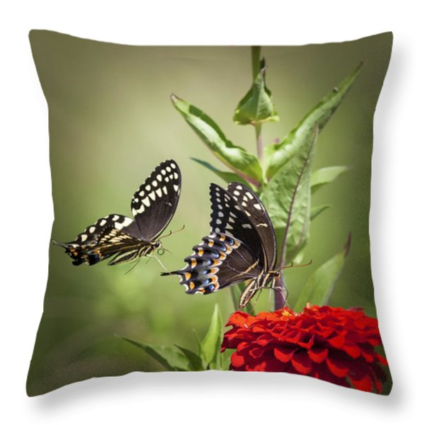Palamedes Swallowtail Butterflies Throw Pillow by Jo Ann Tomaselli