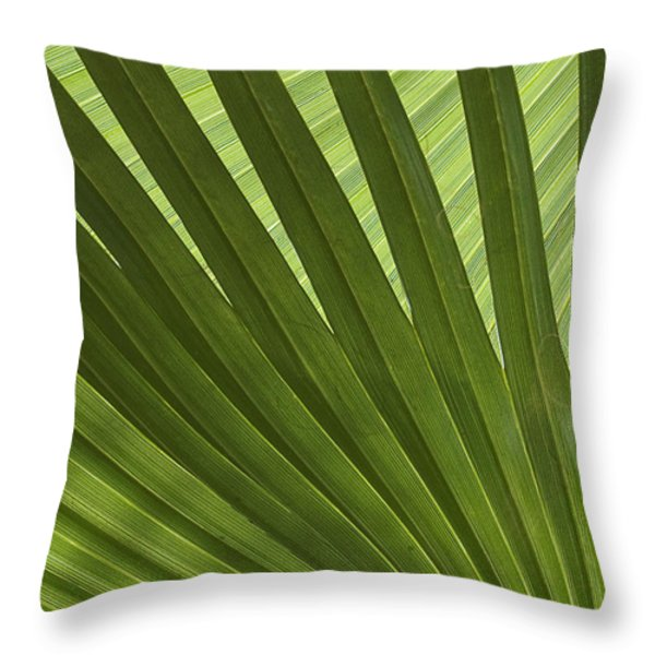 Palm Abstract Throw Pillow by Patty Colabuono
