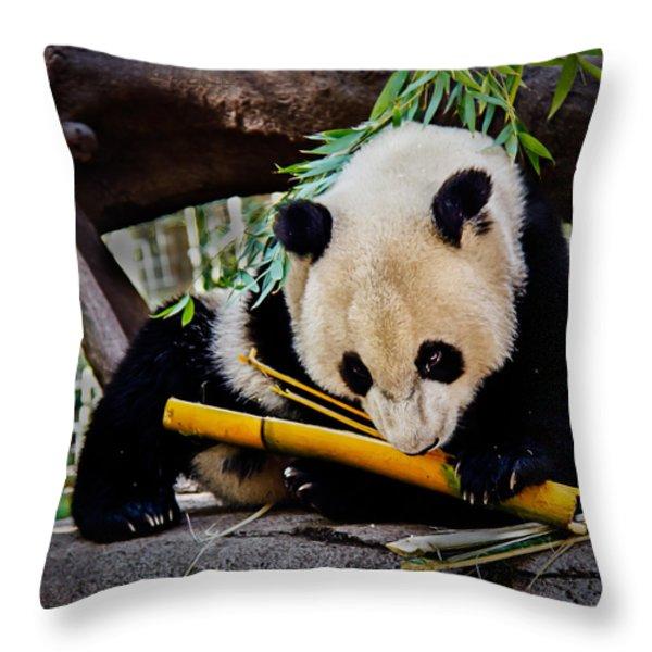 Panda Bear Throw Pillow by Robert Bales