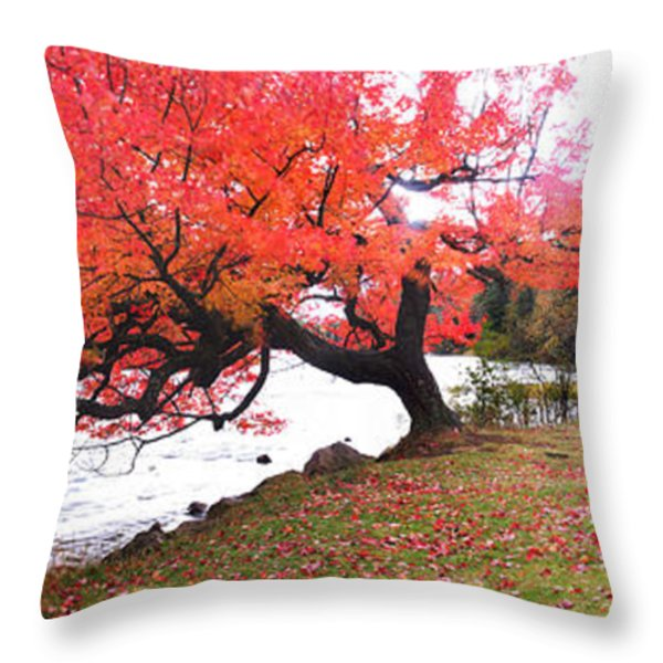 Panorama Of Red Maple Tree, Muskoka Throw Pillow by Henry Lin