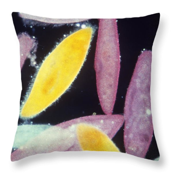 Paramecium Throw Pillow by Gary Retherford