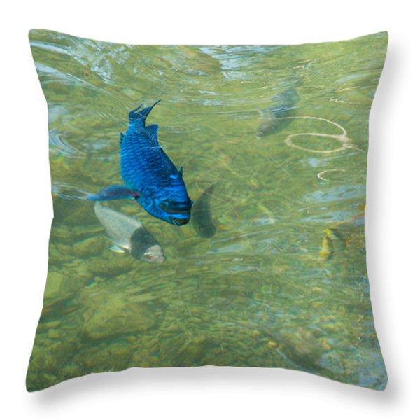 Parrotfish on a Swim Throw Pillow by John Bailey