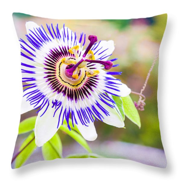 Passiflora Or Passion Flower Throw Pillow by Semmick Photo