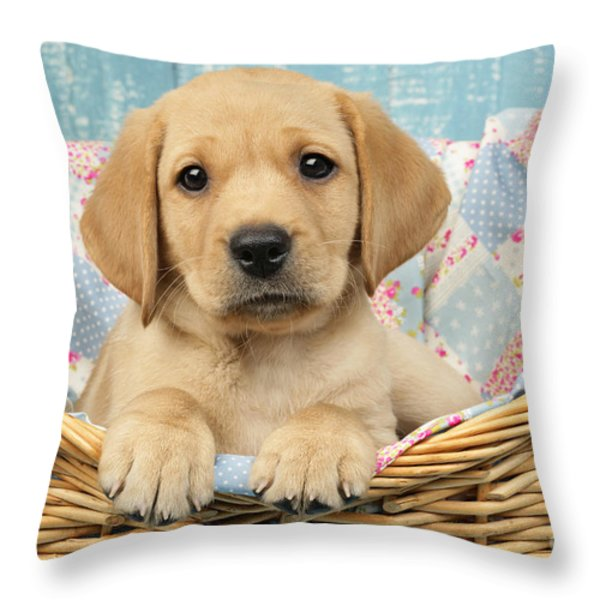 Patchwork Puppy DP793 Throw Pillow by Greg Cuddiford