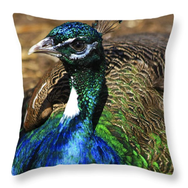 Peacock Blue Throw Pillow by Deborah Benoit