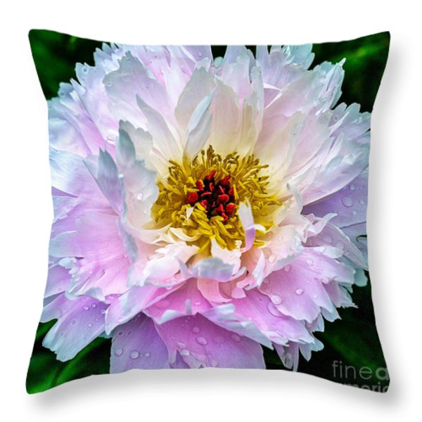 Peony Flower Throw Pillow by Edward Fielding