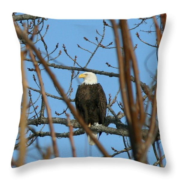 Perched American Bald Eagle  Throw Pillow by Neal  Eslinger