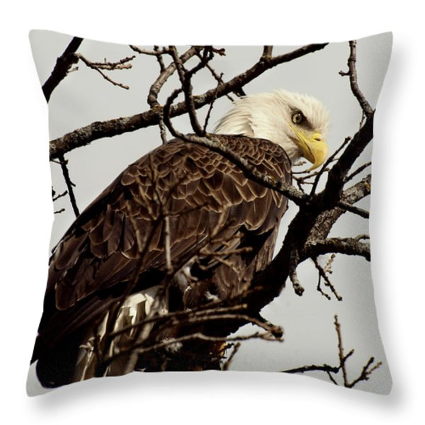Perched On High Throw Pillow by Thomas Young