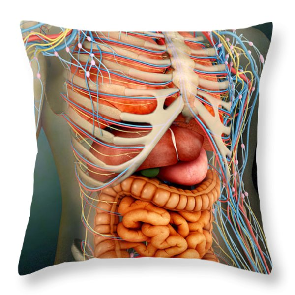 Perspective View Of Human Body, Whole Throw Pillow by Stocktrek Images